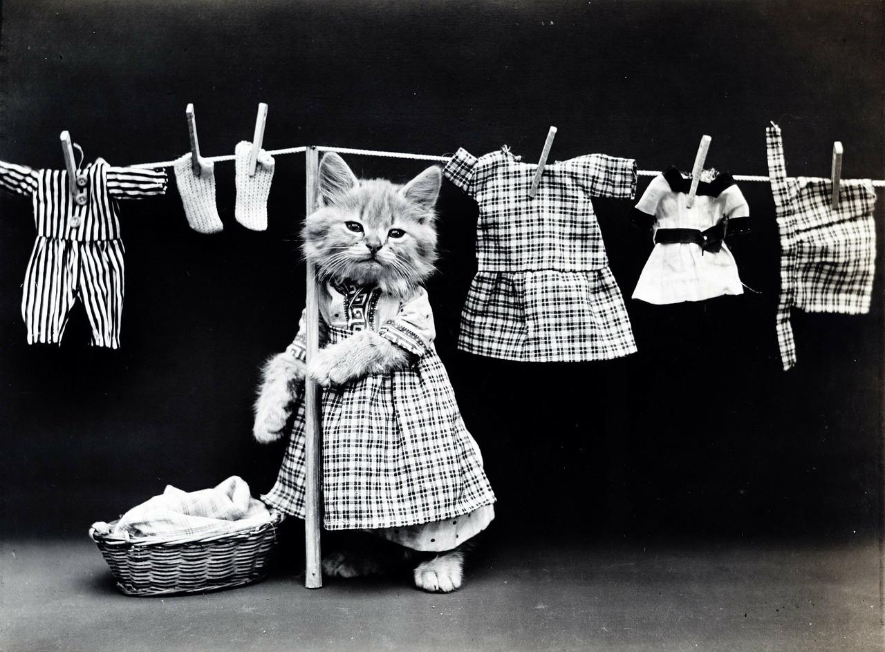 白黒の猫と洗濯物